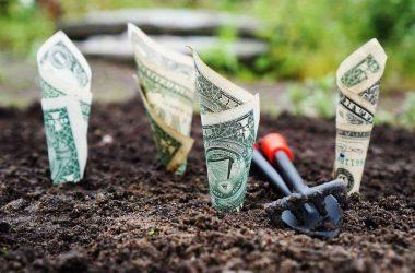 Comment bien investir. Des billets de banque plantés dans la terre/
